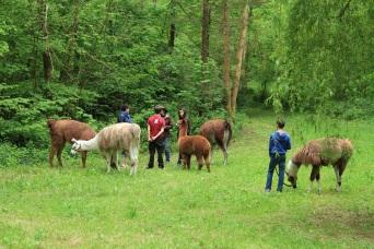 à l'écoute du guide Lamas du Parc, Château de Courcelles-sous-Moyencourt