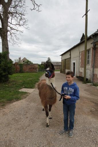 en route avec Dream Lamas du Parc, Château de Courcelles-sous-Moyencourt