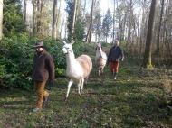 Machu en tête lamas du parc, Château de Courcelles-sous-Moyencourt