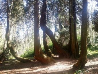 carrefour d'arbres lamas du parc, Château de Courcelles-sous-Moyencourt