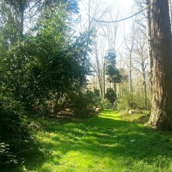 allée verdoyante lamas du parc, Château de Courcelles-sous-Moyencourt