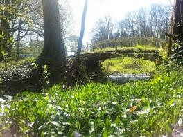 pont de l'arboretum lamas du parc, Château de Courcelles-sous-Moyencourt