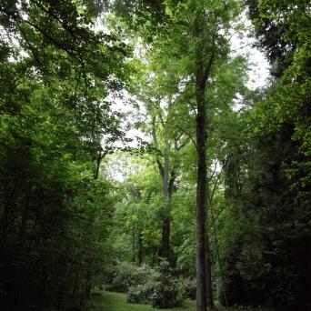 une allée mystérieuse Lamas du Parc, Château de Courcelles-sous-Moyencourt