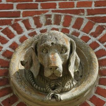 tête de chien au chenil Lamas du Parc, Château de Courcelles-sous-Moyencourt