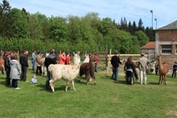 accueil de groupes Lamas du Parc, Château de Courcelles-sous-Moyencourt
