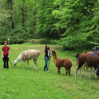 pause casse croute pour les lamas Lamas du Parc, Château de Courcelles-sous-Moyencourt