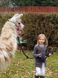Hercule et une jeune fille lamas du parc, Château de Courcelles-sous-Moyencourt
