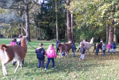 lamas et enfants dans notre parc